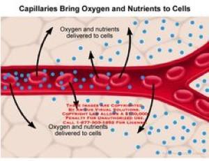 kepentingan-sel-darah-merah