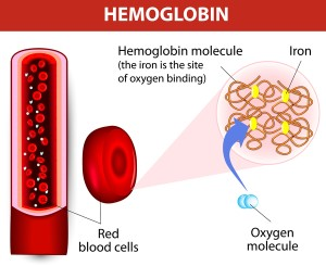 kandungan-sel-darah-merah