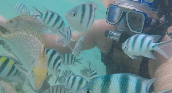 snorkling-pulau-sapi